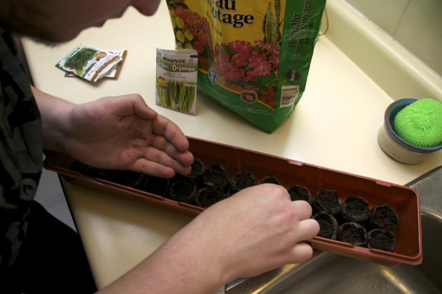 planting the herb seeds
